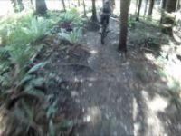 Woodlot Shotgun 06-2011