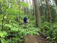New Seymour Trail Shorn Scrotum