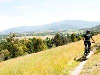 Mountain biking in Victoria: Bikes and Brews...