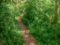 Trail Prokopskej plot | Prokopské údolí |...