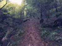 Sentiero San Daniele - Pont dela Stua