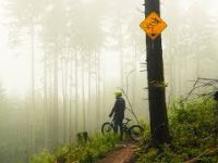 Downhill in the Dark DH Forest