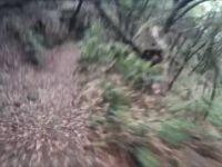 Ilha trail