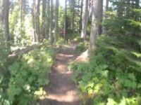 Sun Peaks Bike Park - Root Dog [Aug 2013]