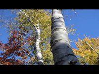 2014 Stowe Mountain Bike Club Leaf Blower Classic