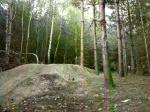 swinley woods
