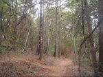 A Sampling of fun in Soquel Demonstration Forest