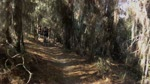 North Abyss Trail @ Balm Boyette Scrub Preserve