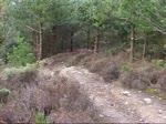 kilvey hill!