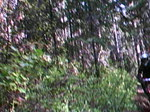 Beardance from Crane Creek to Trailhead