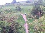 track path step down