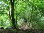Path Gap #5