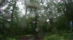 Burly Maple at Sugarbush