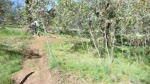 goatfarm snake run