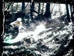 Rowdy Creek Trail