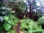 Pedra Torta Trail