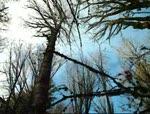 Franks trail Wintergreen