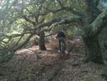 GnarCal Downhill