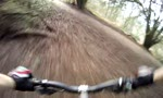shotover dh tracks