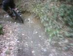 Marin Trail March 2011