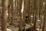 Krazy Karpenter - riding through the stump