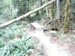 Pioneer Pacific Mountain Biking