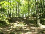 Kelso rock garden