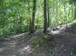log drop