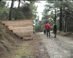Forest Gam Trail