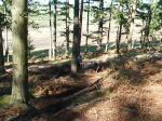 thrunton woods