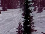 climbing pine-ridge