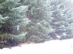 Snowy Marin !!
