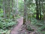 Vedder Mountain - Dilemma