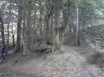 path gap in rid woods