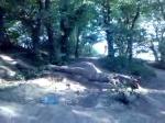 liam hitting log jump 2 path-gap!