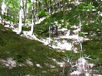 Zooming on sidewinder, Kingdom Trails