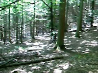 Setmurthy Common Downhill