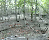 Patapsco Valley State Park - Trail Called 'Drugs'