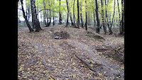 Trupi forest
