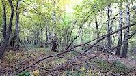 Mateusz in Trupi Forest