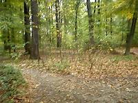 Trzebnica las bukowy