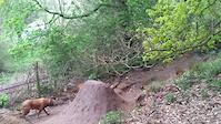 New trail 2