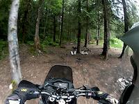 Chipmunk Creek trail 1