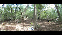 Box Woods edit!