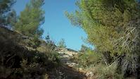 david rock garden