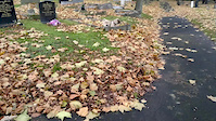 Bandit V's Leaves .