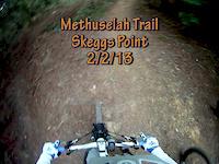 Methuselah Trail, Skeggs Point, 2/2/13