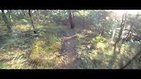 Dingo Trail - Brisbane