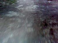 downhill/freeride
