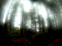 Thrillium, WA..This Trail Has It All